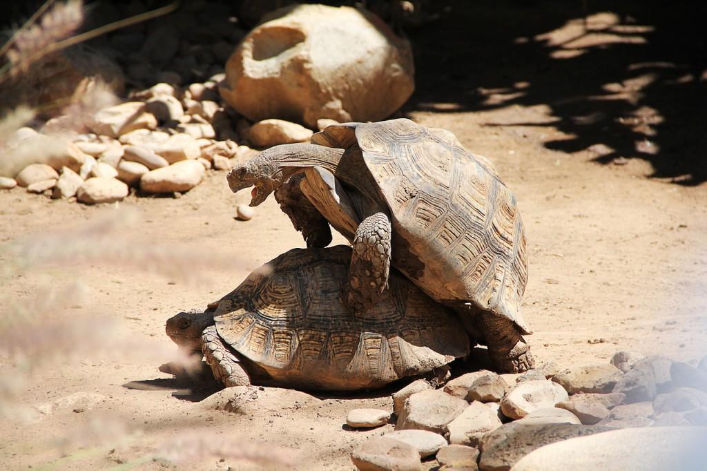 turtle-797334_1280